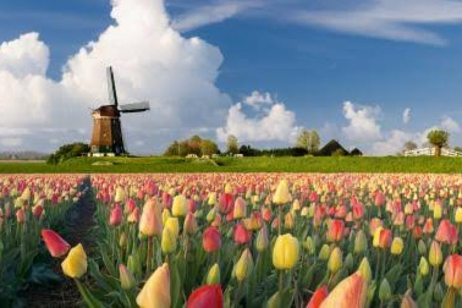Netherlands' Resilient Floriculture Sector program publishes report on crimes conducted through the infrastructure of the floriculture industry